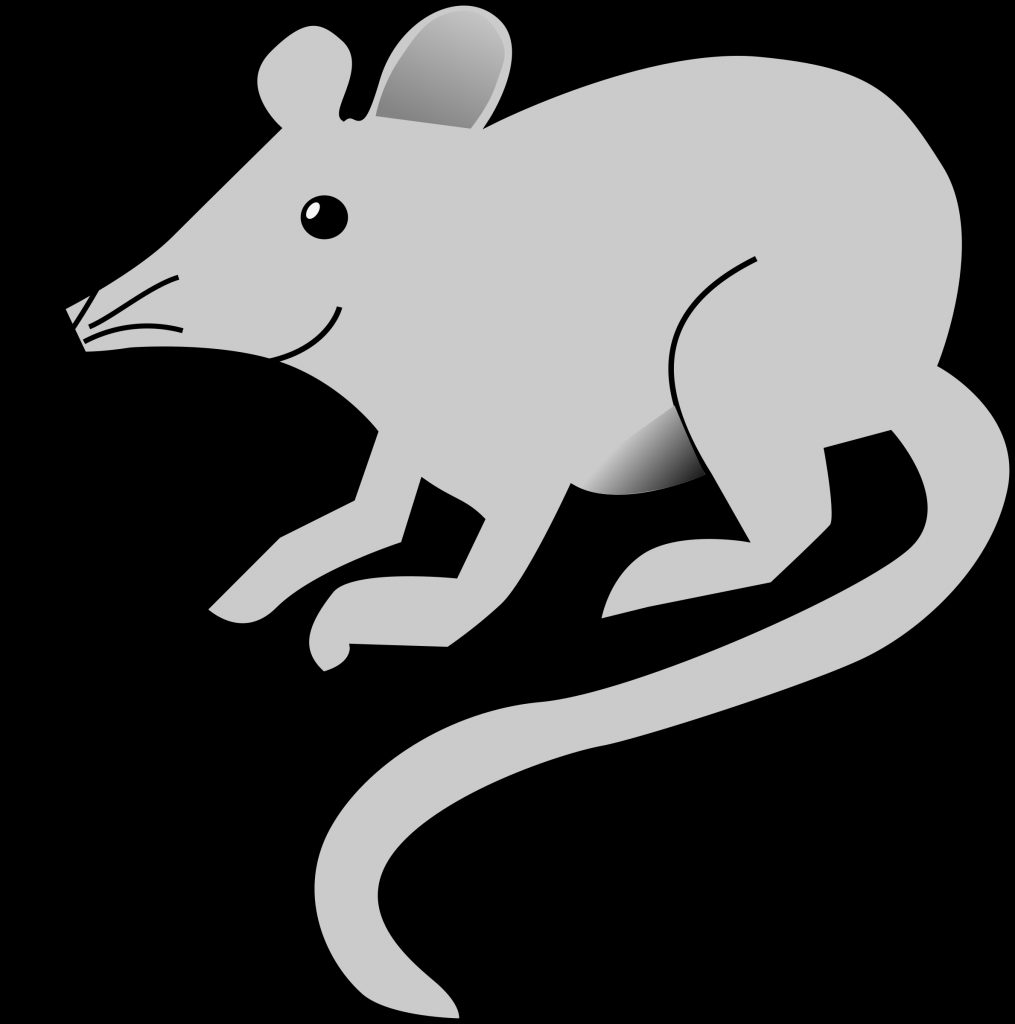 28 collection of mouse clipart no background rat clip art