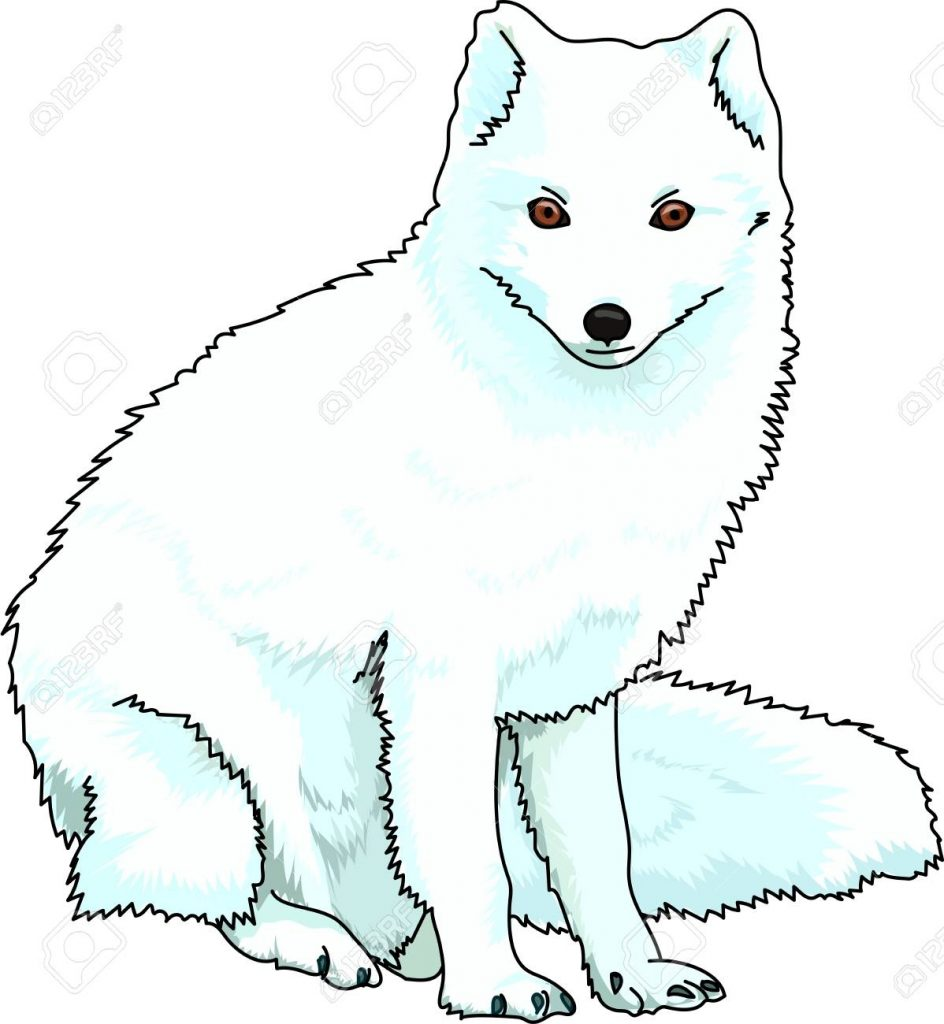 a blue fluffy arctic fox on a white background