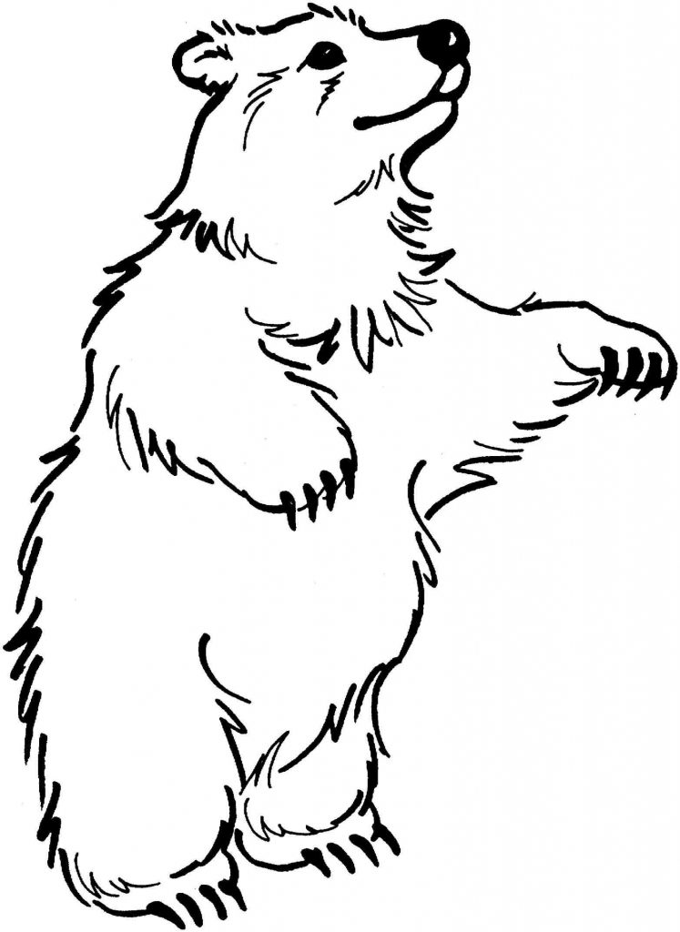 bear black and white brown bear clipart black and whitewild