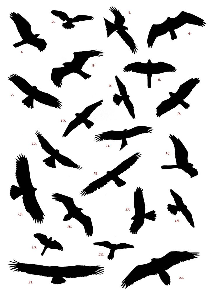 birds flying silhouette tattoo clipart free to use clip