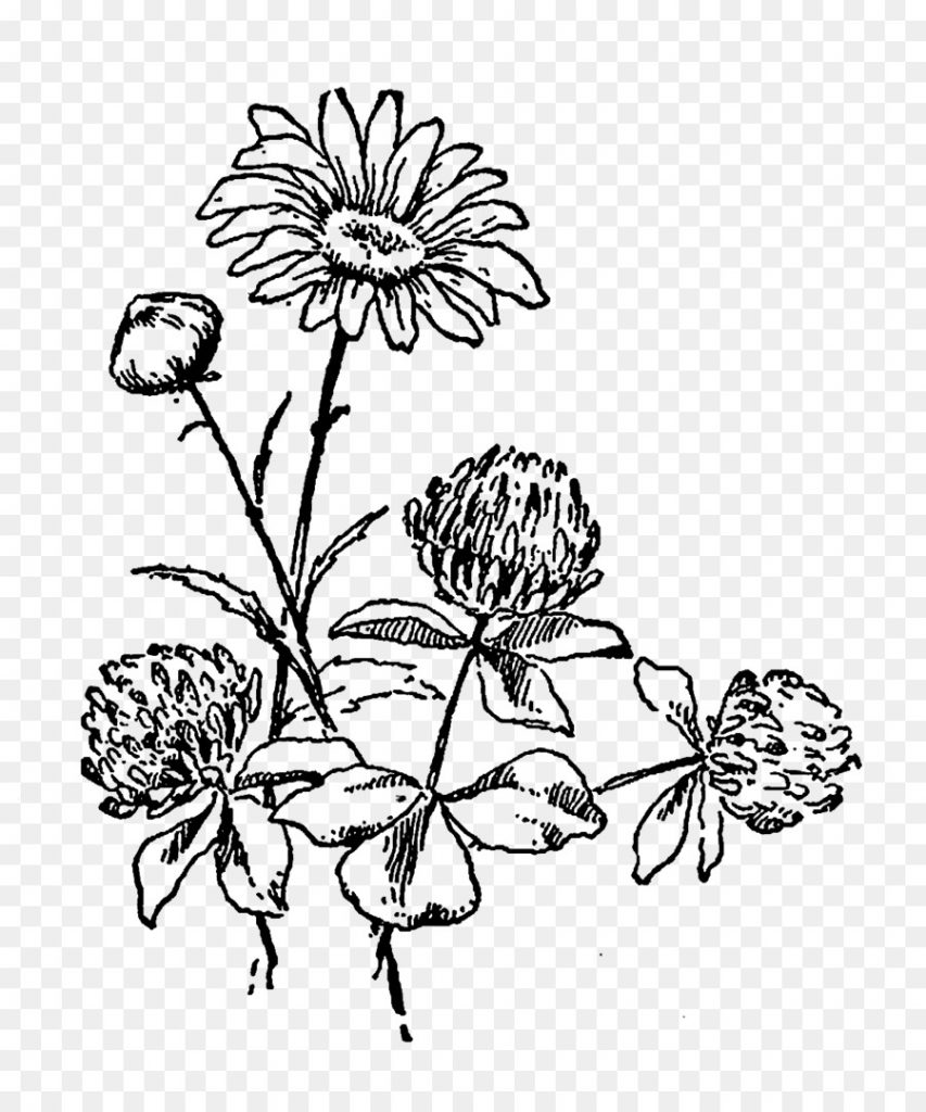 black and white flower clipart drawing flower