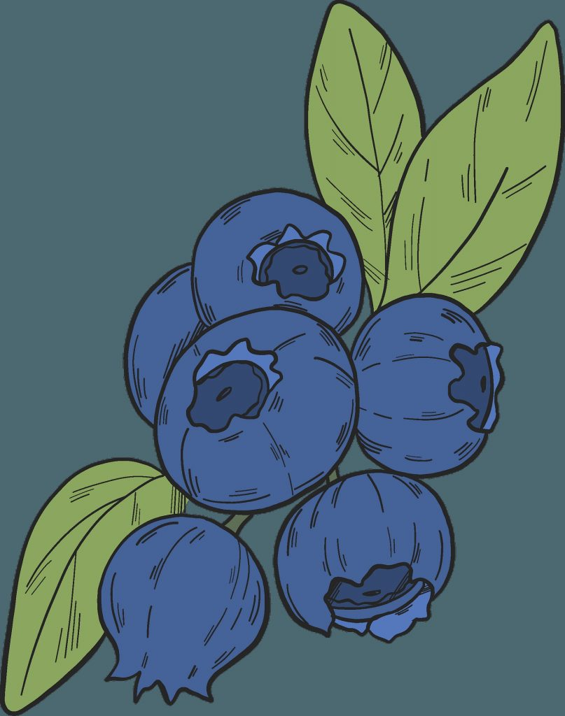 blueberry clipart free download transparent creazilla