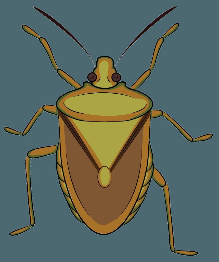 brown marmorated stink bug clipart free download