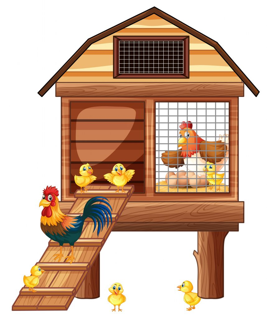 chicken coop with many chicks download free vectors