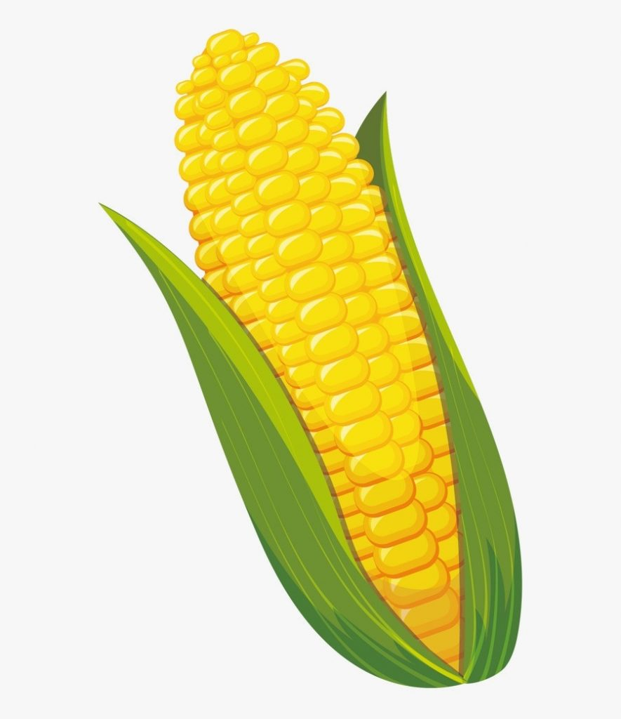 corn clipart transparent png corn on the cob clipart