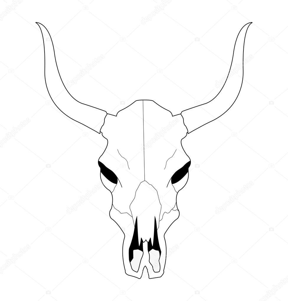 cow skull with horns 75627967
