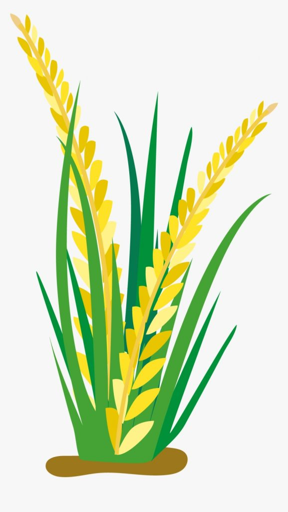 field clipart rice clip arts for download rice plant