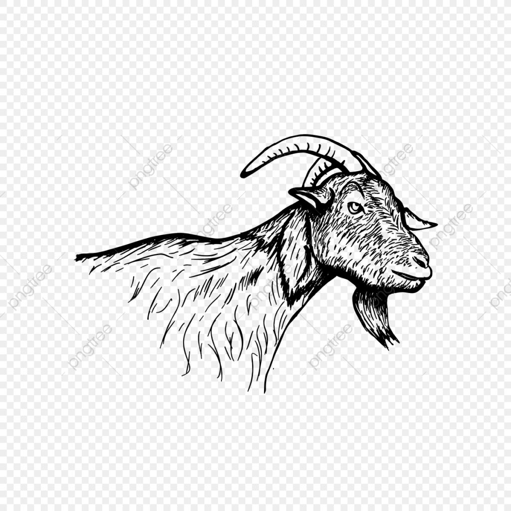 goat head hand drawn vintage goat psd hand drawn png