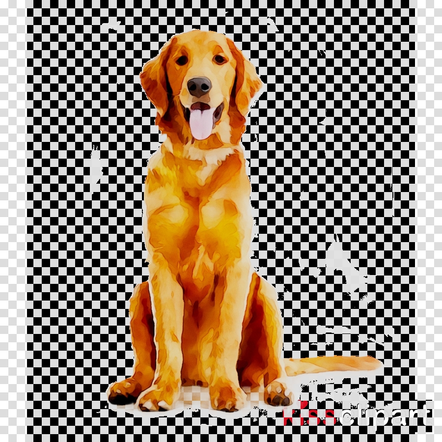 golden retriever background clipart puppy pet dog