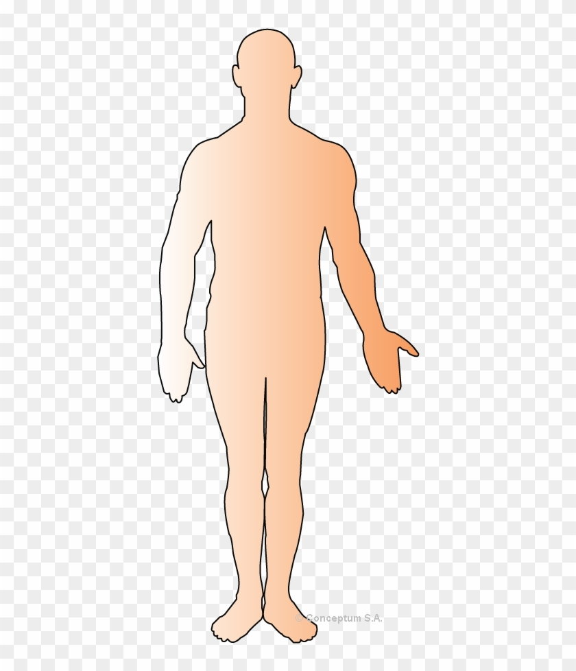 human body outline png human body outline clipart