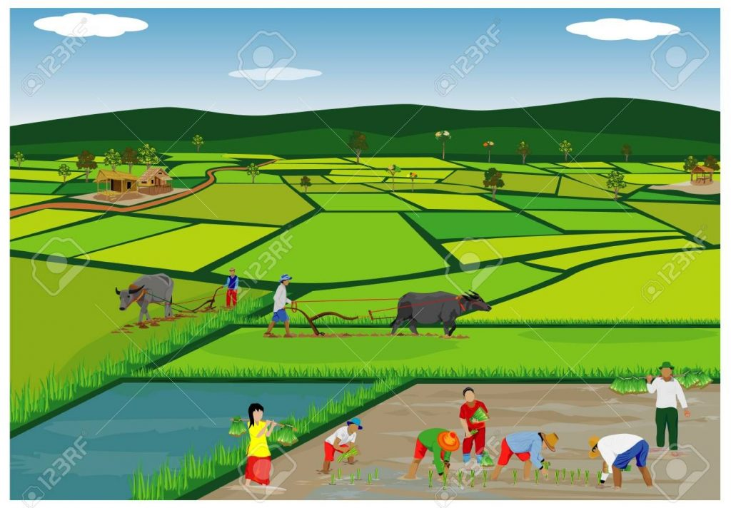 illustration of farmers planting rice in paddy field