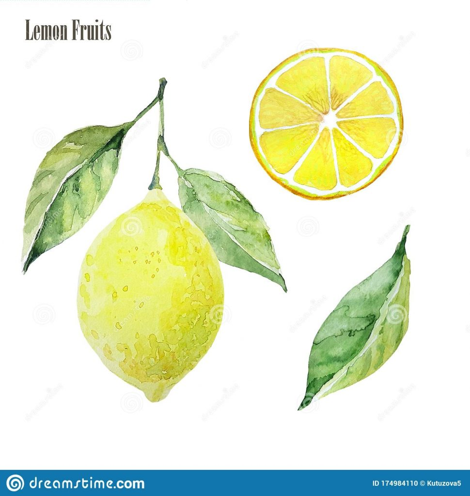 lemon clipart set watercolor illustration lemon fruit