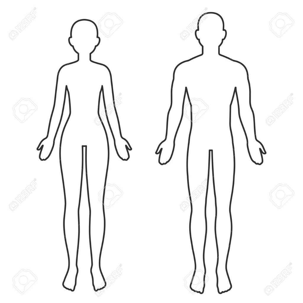 male and female body silhouette outline blank anatomy template