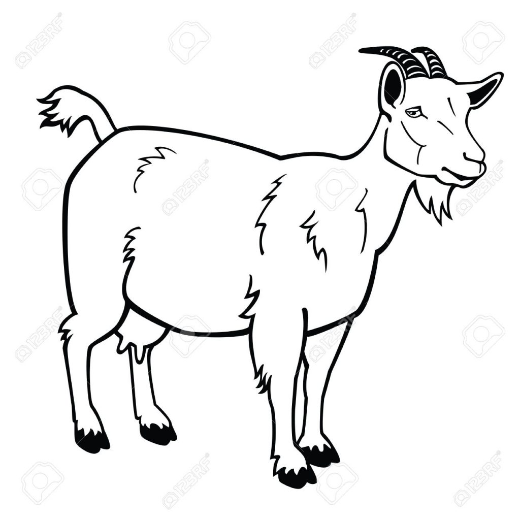 standing goatblack and white vector imageside view contour