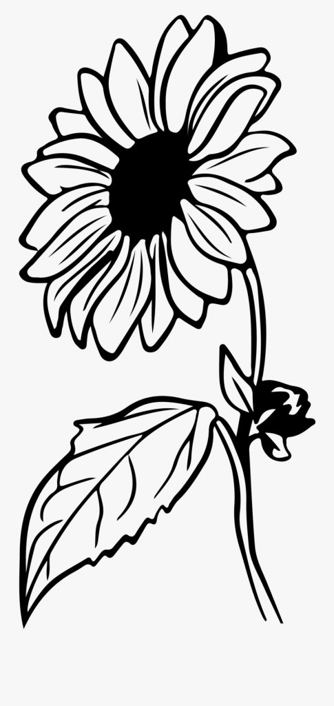 sunflower clip art black and white free transparent