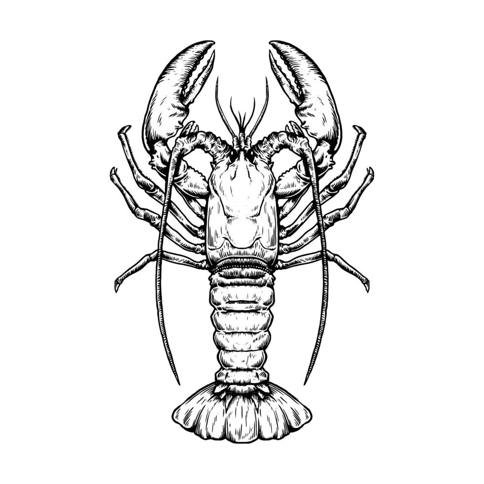 top down view of vintage hand drawn lobster download free