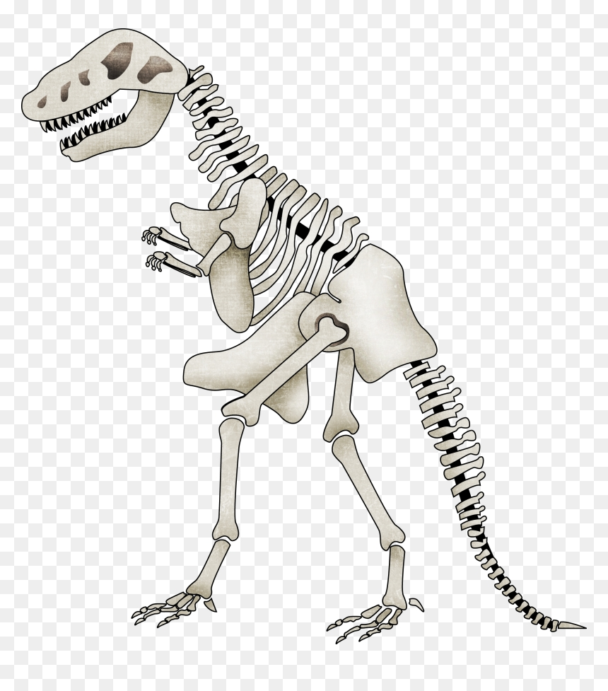 transparent background dinosaur skeleton clipart hd png
