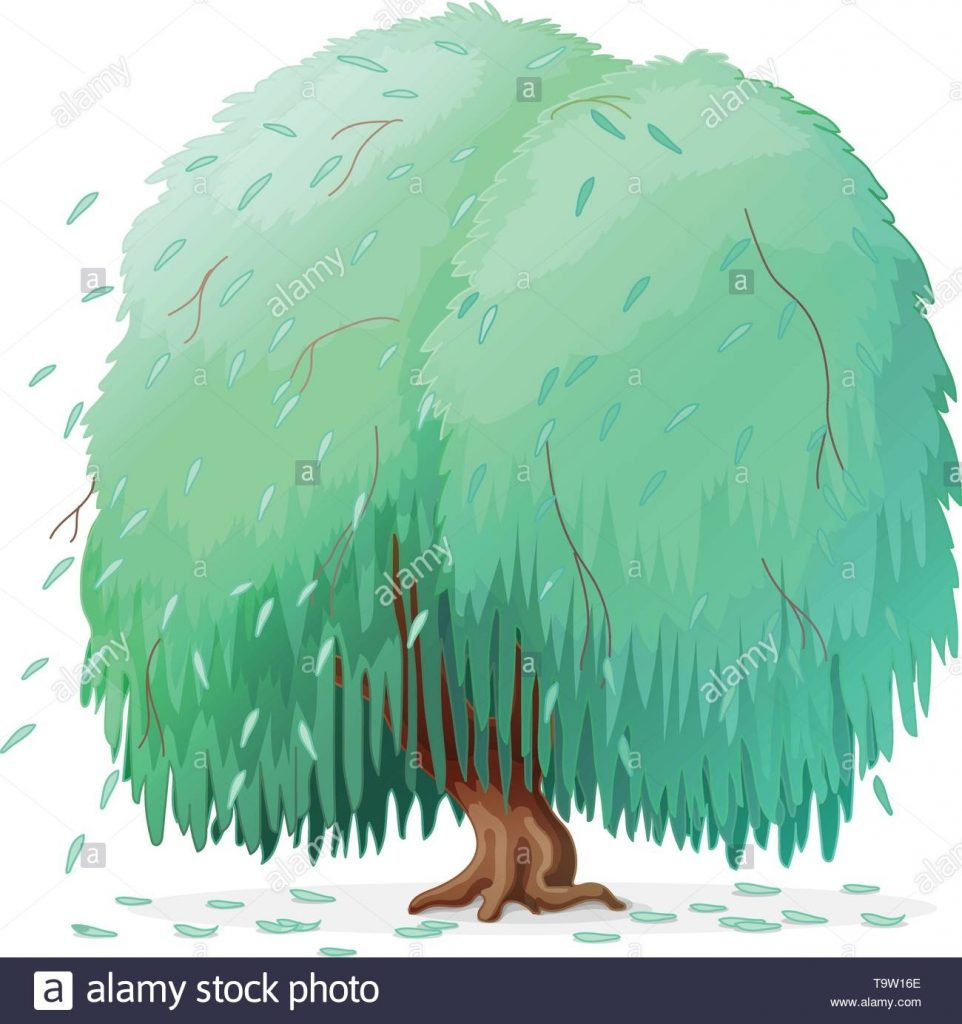 vector cartoon plants clipart weeping willow tree stock